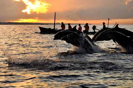 lovina wisata lumba lumba bali